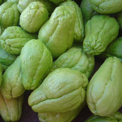 Picture of CHAYOTE (3UNIDADES)