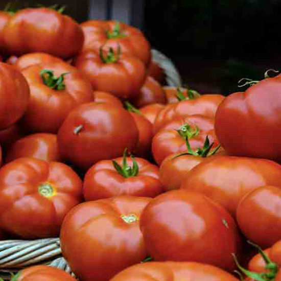 Picture of TOMATE ENSALADA (LB)