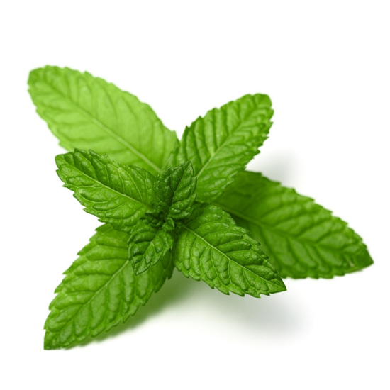 Picture of MENTA